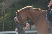 Waarom houdt mijn paard zijn hoofd niet stil
