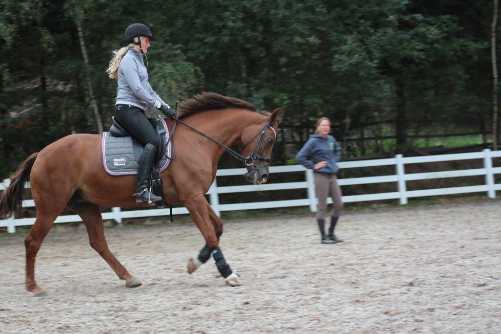 Help mijn paard houdt zijn hoofd niet stil