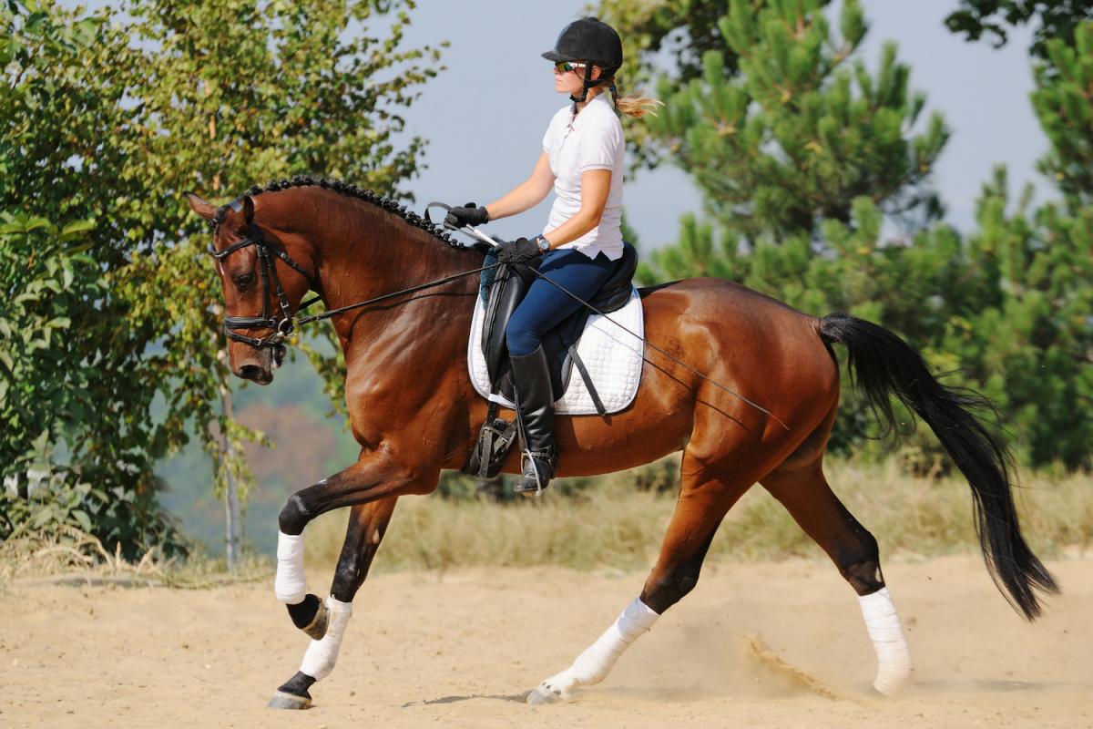 Zo maak je je paard scherper aan je been