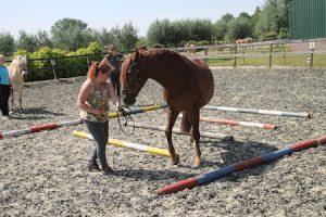 Hoe maak ik mijn paard sterker als ik naast hem sta?