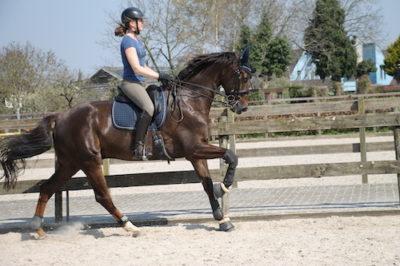Hoe maak ik mijn paard sterker onder het zadel?