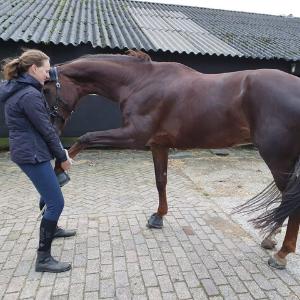 Pilates voor je paard