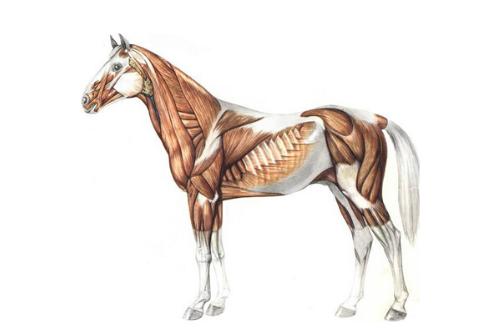 Uitgelichte afbeelding MuscleMonday II