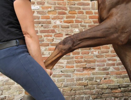 Heeft jouw paard last van stijve schouders?