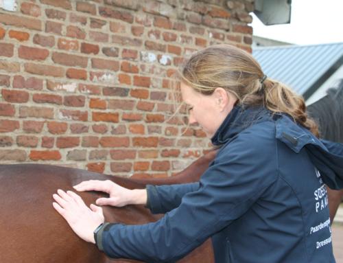 Waarom laat jij je paard masseren?